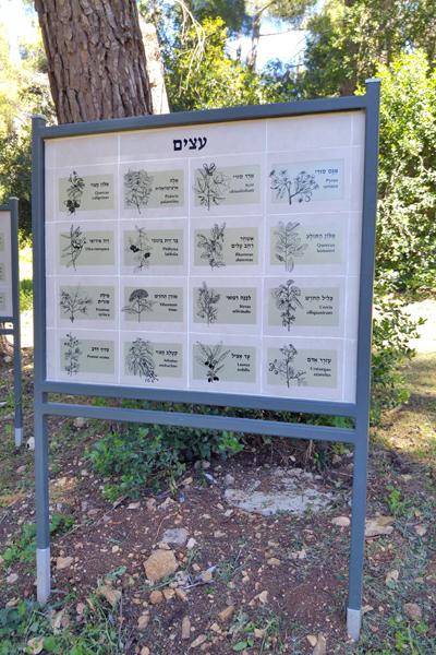 שלטים בעיצוב אישי קבוץ סאסא הגדרת צמחים